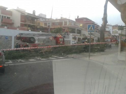 EFECTIVOS DE BOMBEROS RETIRAN LOS RESTOS DE UN ÁRBOL CAÍDO EN LAS CALLES ALEDAÑAS AL HOSPITAL DE MOTRIL (Foto: El Faro)