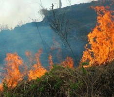 INCENDIO FORESTAL EN SALOBREÑA (Foto: Archivo)