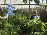LA POLICÍA INSPECCIONA LA PLANTACIÓN INCAUTADA EN LOS GUÁJARES (Foto: P. Nacional)