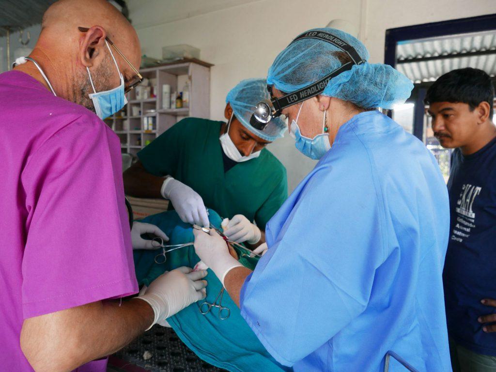 Rabia, la enfermedad desatendida que mata a más de 59.000 personas al año  en el mundo | El Faro